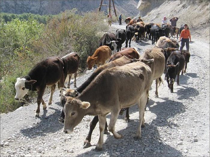 Узбекские таможенники убили агрессивного таджикского пастуха