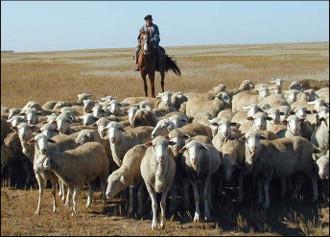 Таджикистан: Где пасти скот, или Не пора ли приватизировать холмы и луга?