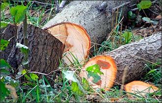 Борьба за зеленый каркас Бишкека, или Кто защитит парки столицы Кыргызстана?