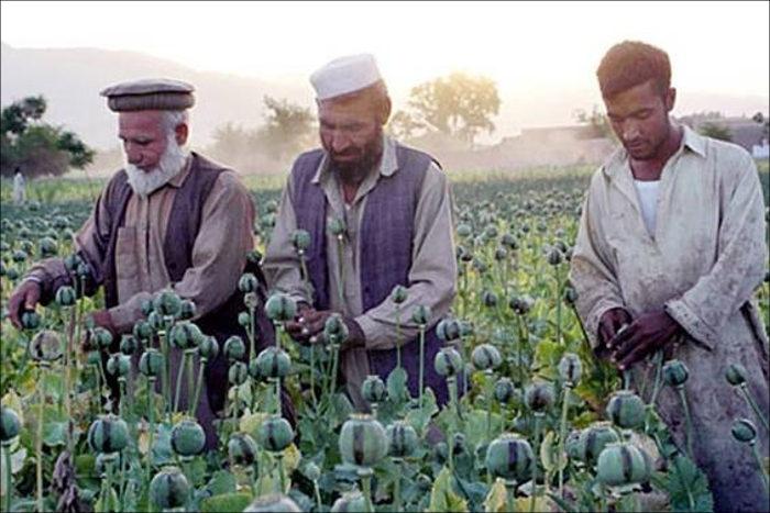 Объемы производства опиума вАфганистане загод выросли на87 процентов