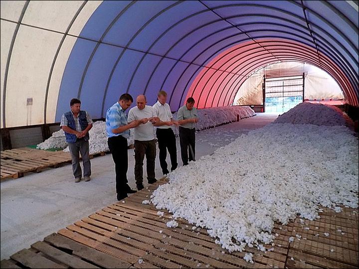 НаСтаврополье все есть условия для выращивания хлопка