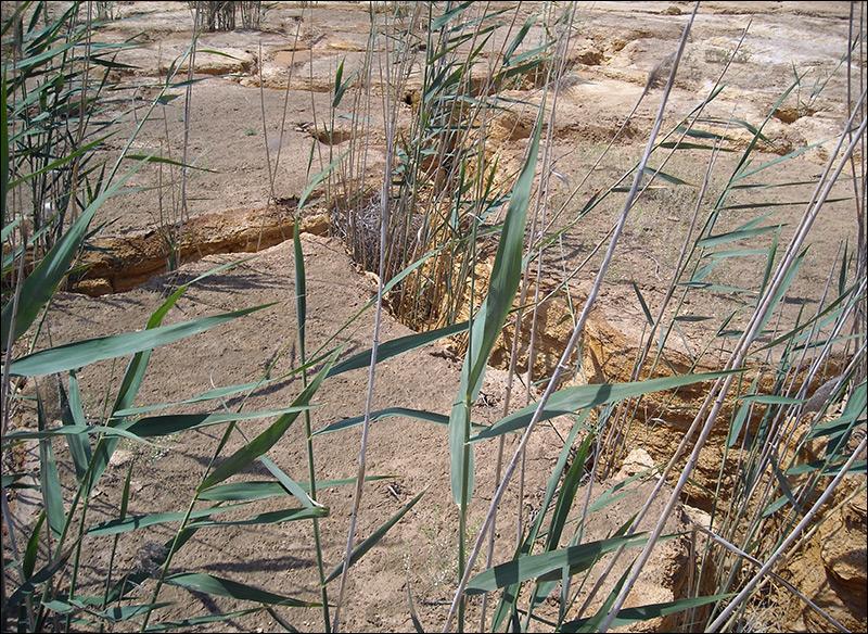 Высохшая и растрескавшаяся поверхность Дегмайского хвостохранилища