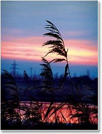 небосвод по утрам набухает с виду угрожающей непогодой, а к вечеру разгораются над горизонтом багровые зарева
