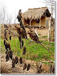 Лишь изредка в этих пустынных открытых ветрам пространствах можно наткнуться на брошенный шийпан - летний домик пастуха или дехканина на краю голой пашни