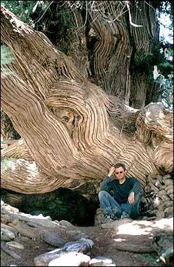 Супер дерево