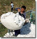 Компании Европы и США выступают против использования детского труда при сборе узбекского хлопка
