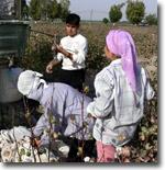 Дети на полях Узбекистана: Заявления властей пока расходятся с делом
