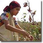 Узбекистан: Опубликован доклад об использовании детского труда