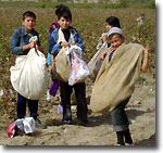 Узбекистан: Школьников Сурхандарьи снова выгнали на хлопковые поля, а в Фергане детей не тронули