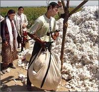 Узбекистан: Работать на полях вместо себя студенты посылают поденных рабочих