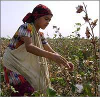 В Европе поданы жалобы на компании, торгующие узбекским хлопком, за поощрение рабского детского труда