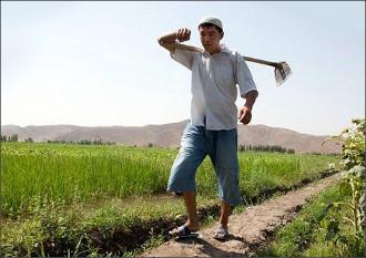 Прибыль в полтора сома. Как расплачиваются фермеры за «обиды» президентов Казахстана и Киргизии